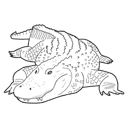 american: Alligator American