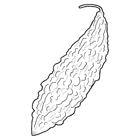 balsam: Balsam Apple, Balsam Pear Vegetable Food Stock Photo