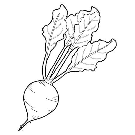remolacha: Alimento vegetal de remolacha Foto de archivo