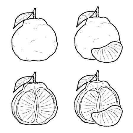 Ugli Vector Illustration Hand Drawn Fruit Cartoon Art