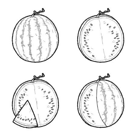 Watermelon Vector Illustration Hand Drawn Fruit Cartoon Art