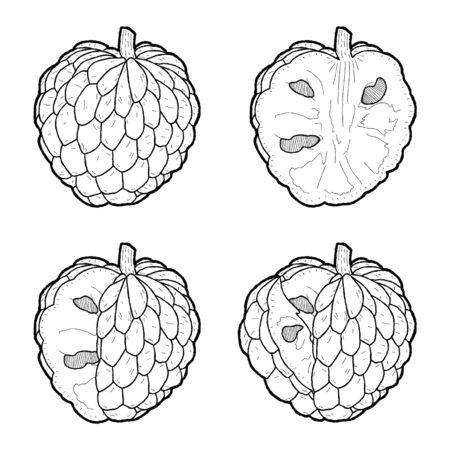 Custard Apple Vector Illustration Hand Drawn Fruit Cartoon Art Vetores