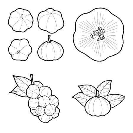 Star Gooseberry  Vector Illustration Hand Drawn Fruit Cartoon Art Ilustracja