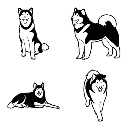 Alaskan Malamute Vector Illustration Hand Drawn Animal Cartoon Art Illustration