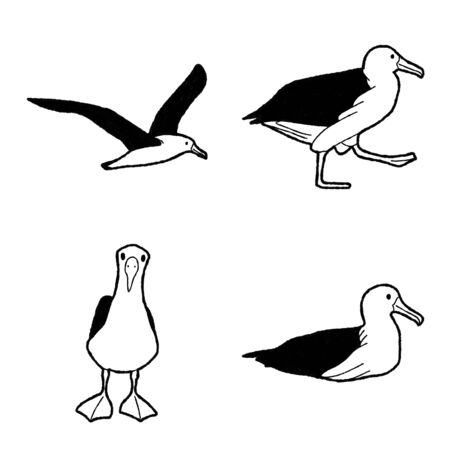 Albatross Vector Illustration Hand Drawn Animal Cartoon Art