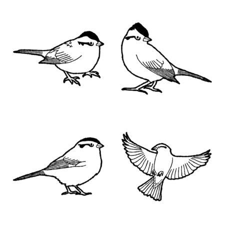 American Tree Sparrow Vector Illustration Hand Drawn Animal Cartoon Art