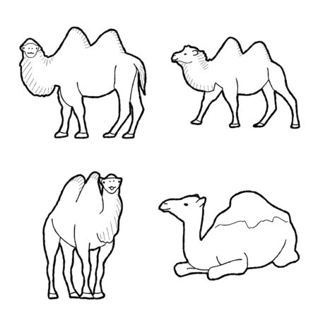 Bactrian Camel Animal Vector Illustration Hand Drawn Cartoon Art