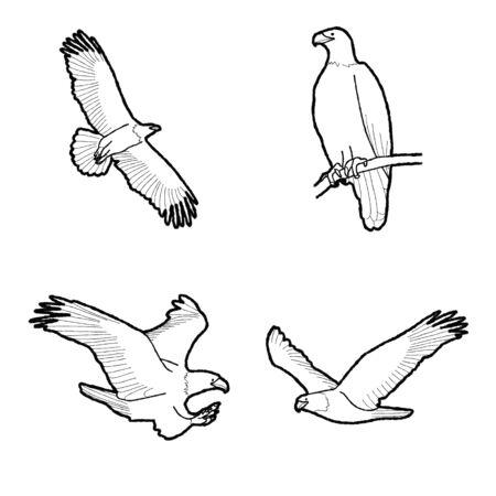 Illustrazione di vettore animale aquila calva Arte del fumetto disegnato a mano