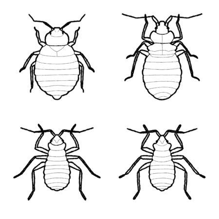 Bed Bug Animal Vector Illustration Hand Drawn Cartoon Art Иллюстрация