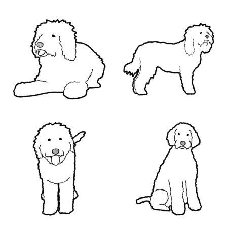 Barbet Animal Vector Illustration Hand Drawn Cartoon Art Vector Illustration