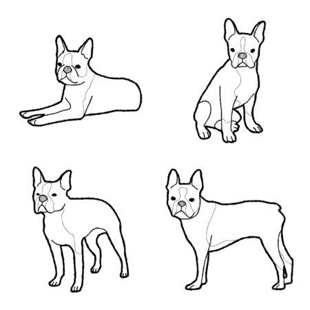 Boston Terrier Animal Vector Illustration Hand Drawn Cartoon Art