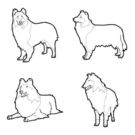 Collie Animal Vector Illustration Hand Drawn Cartoon Art Illustration