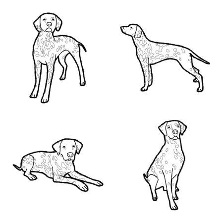 Dalmatian Animal Vector Illustration Hand Drawn Cartoon Art