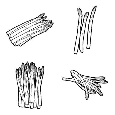 Illustration Vectorielle Asperges Art Dessin Animé Légumes Dessinés Main