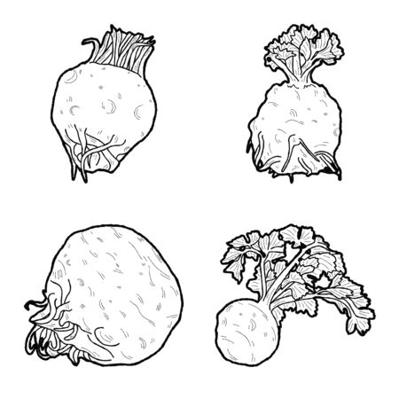 Celeriac Vector Illustration Hand Drawn Vegetable Cartoon Art