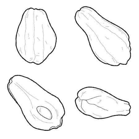 Chokos Vector Illustration Hand Drawn Vegetable Cartoon Art