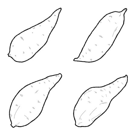 Kumara Vector Illustration Hand Drawn Vegetable Cartoon Art