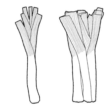 Leek Vector Illustration Hand Drawn Vegetable Cartoon Art
