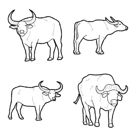 Buffalo Vector Illustration Hand Drawn Animal Cartoon Art