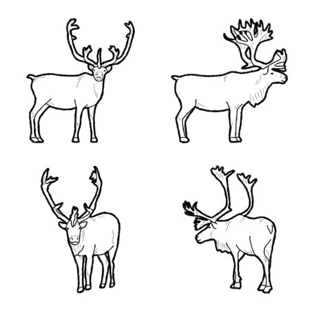 Caribou Vector Illustration Hand Drawn Animal Cartoon Art