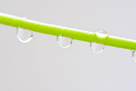 Macroschot van waterdalingen op de stam van een bloem