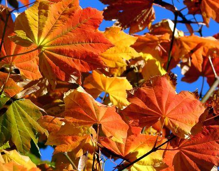 changing seasons: Changing Seasons