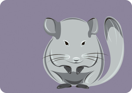 Lovely grey chinchilla on a violet background