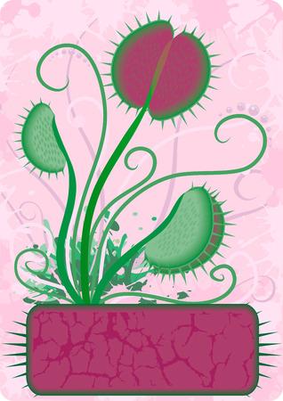 Floral design of Venus Flytrap flower