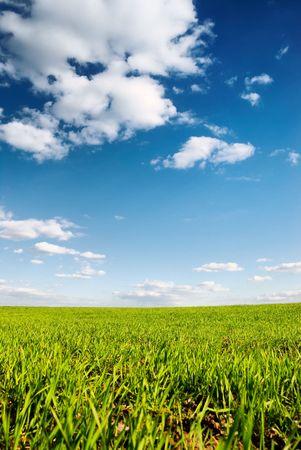 Spring green field under blue sky Banco de Imagens