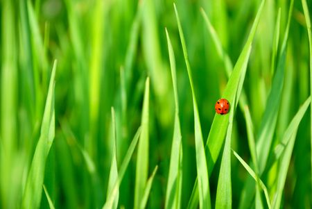 Ladybird and plants background with copy space