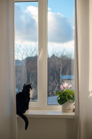 A cat sits on a window sill and looks out the window