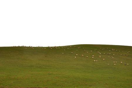 Plateau grassland sheeps Stock Photo - 5271541