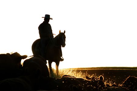 cowboy silhouette: Cowboys on a cattle round up.