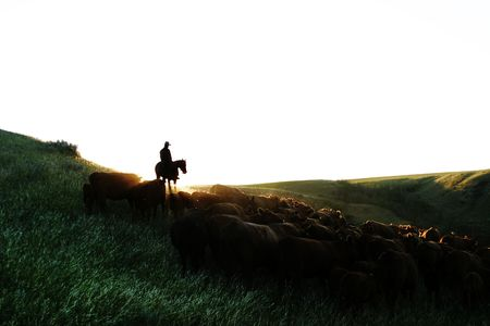 Cowboys on a cattle round up. Stock Photo - 269802