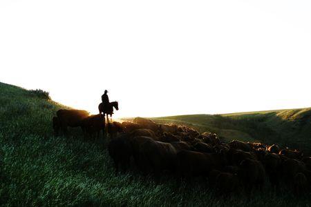 vee: Cowboys op een rundvee ronde op.