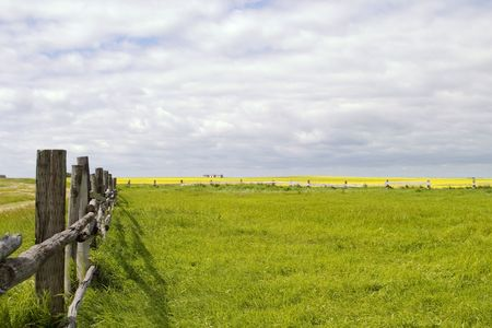 Prairie landscape with old fence line. photo