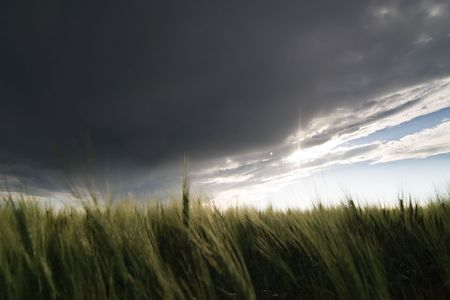 flatland: Prairie Wheat Field looking into the sun on a cloudy stormy day