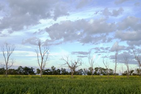 Prairie Landscape with a row of dead trees photo