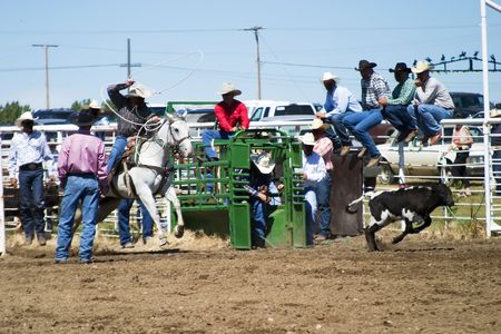 Calf Roping at the Herbert Rodeo Stock Photo - 310340
