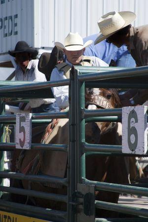 Saddle Bronc riding Stock Photo - 310343