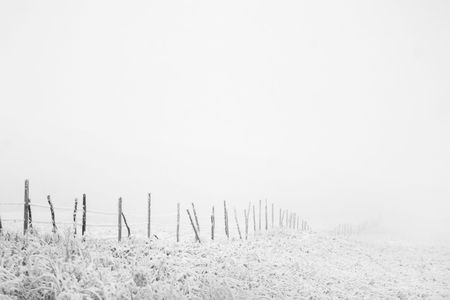 Prairie fence line in fog