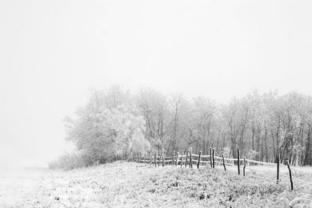 Group of trees on a prairie landscape engulfed in fog in black and white Stock Photo