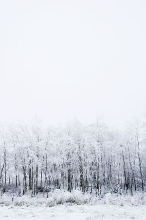 solitair: Group of trees on a prairie landscape engulfed in fog. Stock Photo