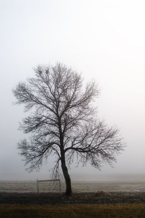 A single tree in the fog. photo