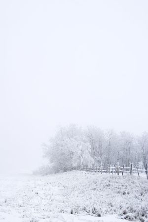 Group of trees on a prairie landscape engulfed in fog. Stock Photo