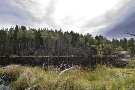 Dead trees and other living things in a marsh near Oslo, Norway photo