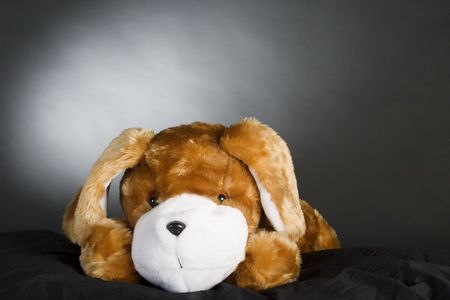 A generic dog stuffed animal posing for the camera. photo
