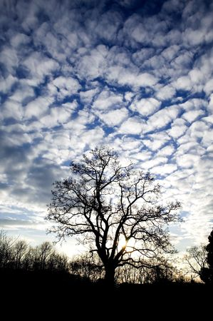 A tree without leaves against a dramatic sky during a sunrise Stock Photo - 774541