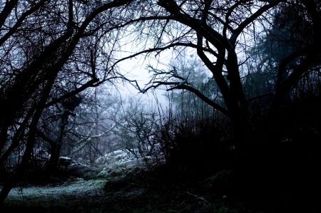 the silence of the world: A spooky path overshadowed bya group of dead trees in thick fog.