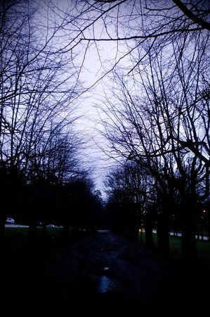 A dark spooky alley overshadowed with trees photo